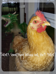 Something behind me rooster